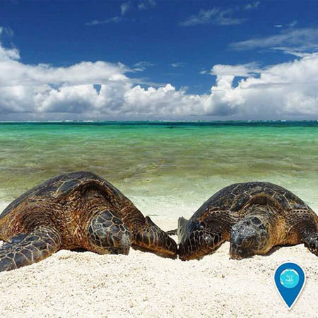 photo of 2 turtles on the beach