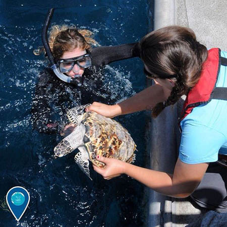 diver releasing a rehabilitated juvenile hawksbill turtle