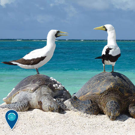 photo of birds on 2 turtles on the beach