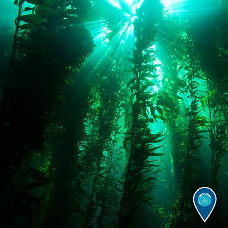 photo ofkelp forest