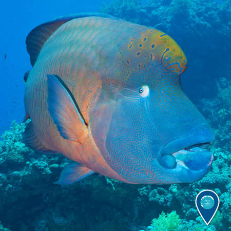 photo of wrasse