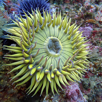 photo of an anemone that is very colorful