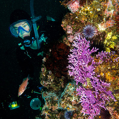 photo of a diver and purple hydrocoral