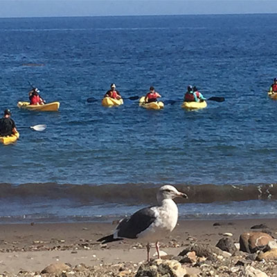 photo of a seagul up close and kayakers in the back