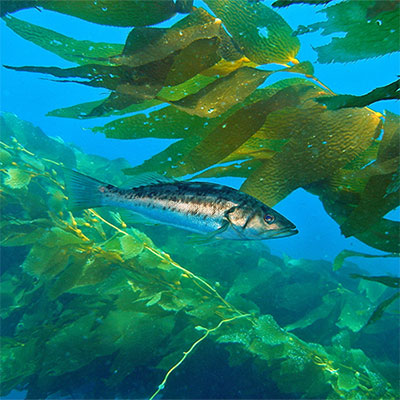photo of a kelp and a fish