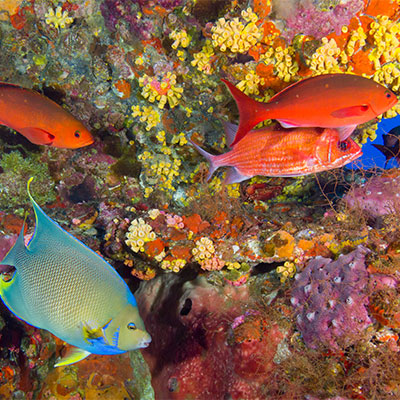 photo of a variety of colorful fish