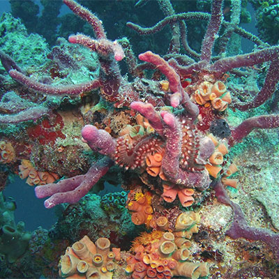 photo of soft coral and fireworm