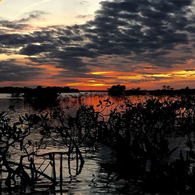 photo of a winter sunset in the mangroves