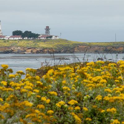 photo a a light station in cambria with yellow flowers in the foreground