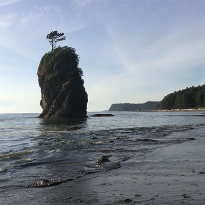 photo ofbeautiful coastal spruce forest that comes right down to the beach