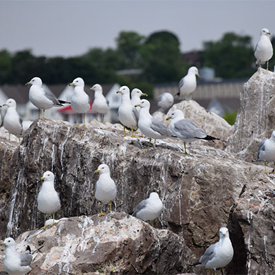 photo of a flock of seagulls
