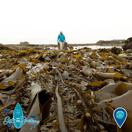 photo of a woman walking near kelp