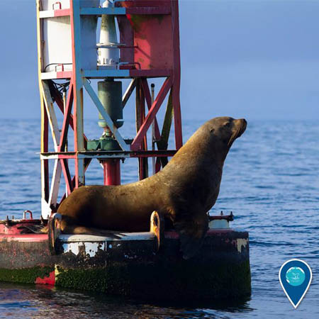 photo of sea lion on a buoy