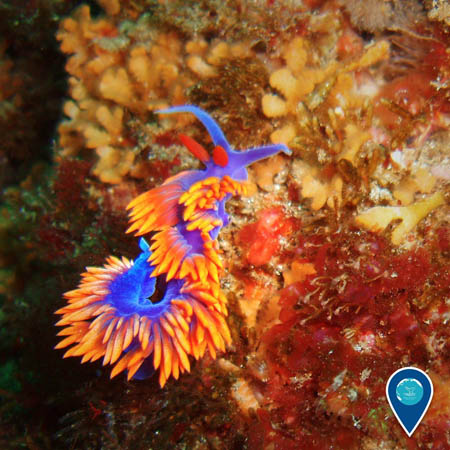 photo of nudibranch