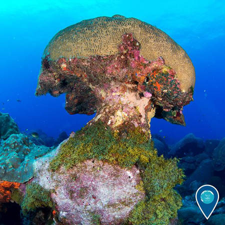 photo of coral shaped like a mushroom