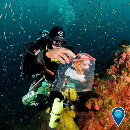 diver collecting samples