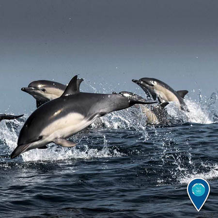 photo of dolphins