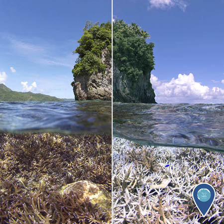 side by side photos of before and after coral bleaching