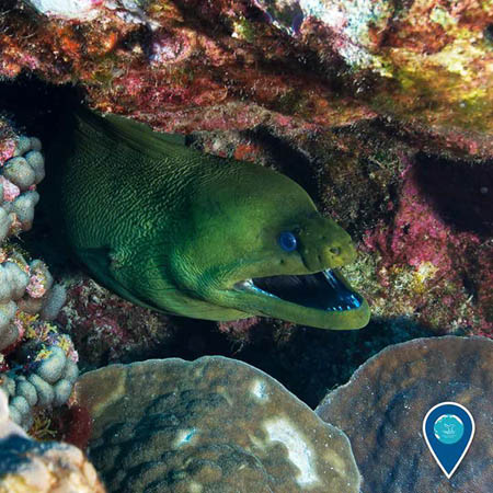 photo of a moray eel