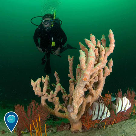 photo of a diver and coral and fish