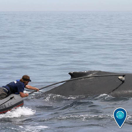 photo of a person tagging a whale