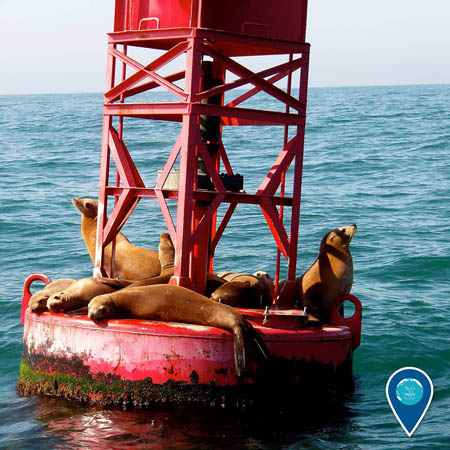 photo of a seals on a buoy