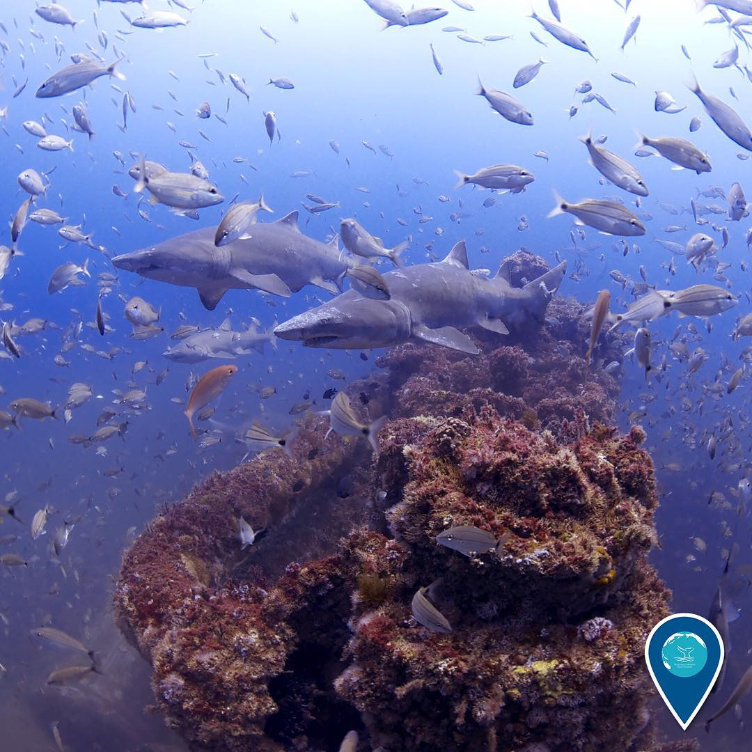 photo of fish and sharks swimming around the dixie arrow shipwreck
