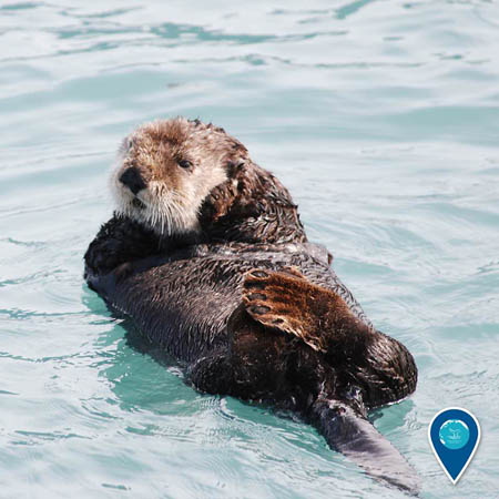 photo of an otter