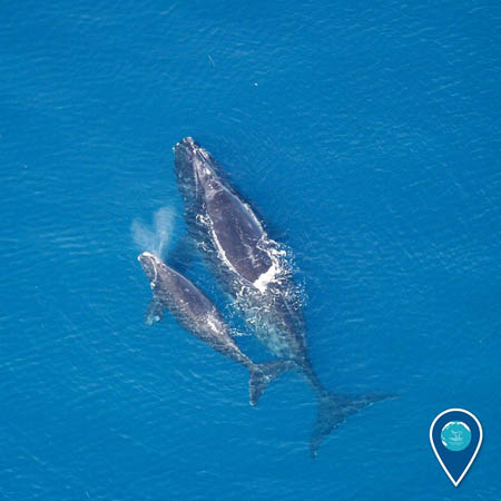 photo of a whale and a calf