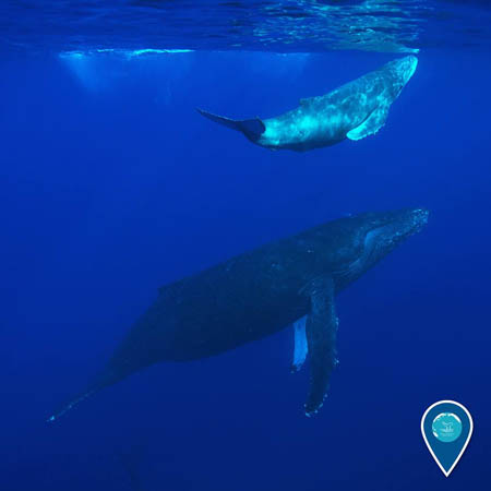 photo of whale and calf