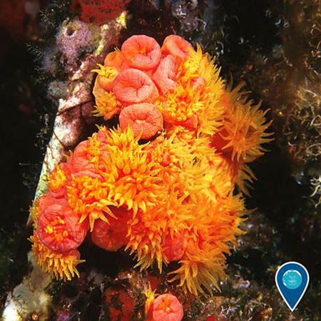 photo of orange coral
