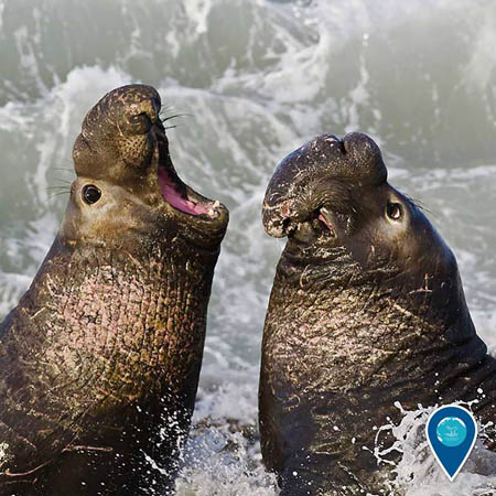 photo of elephant seals