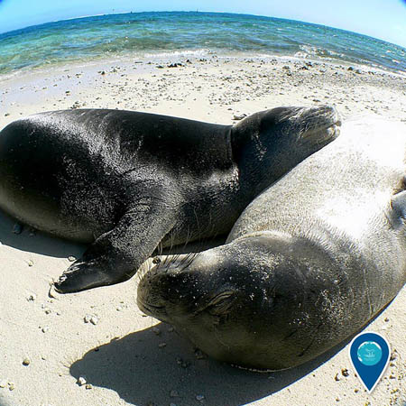 photo of monk seals on a beach