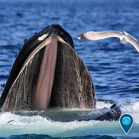 photo of a whale with its mouth open