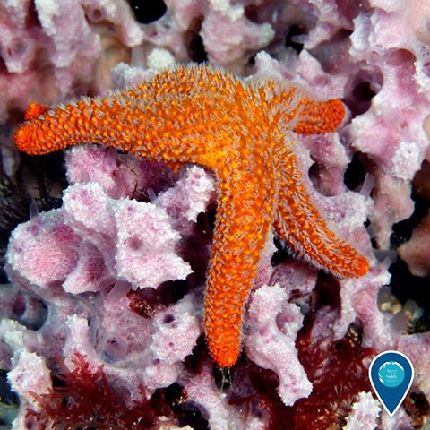photo of a starfish