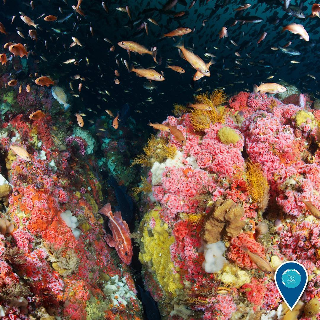 photo of colorful coral and fish