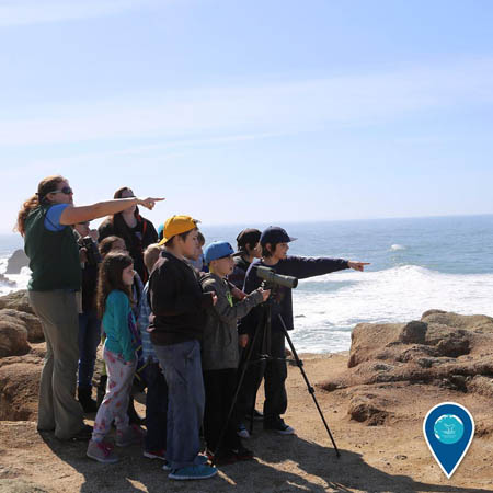 photo of people looking for whales