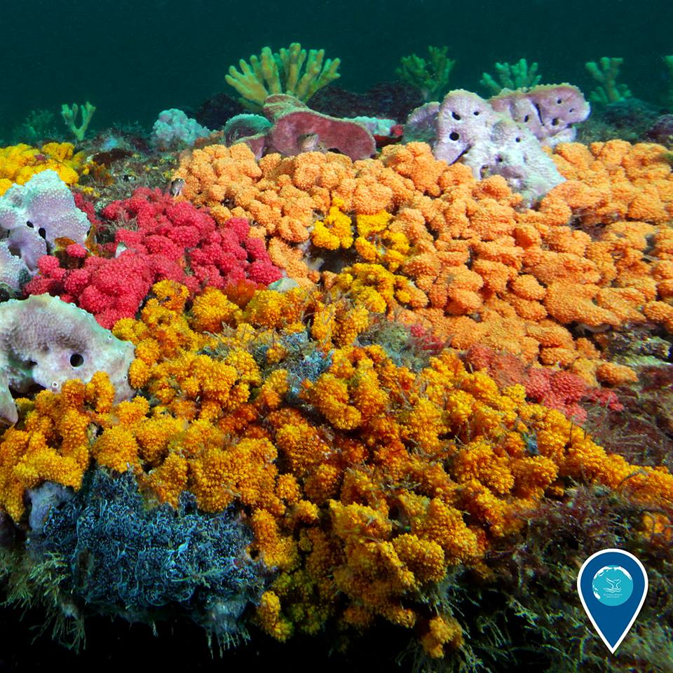 photo of colorful tunicates
