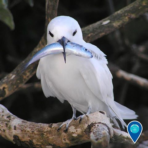 photo of a white bird with a fish in it's mouth