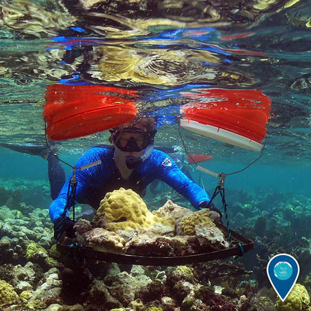 photo of diver holding coral that had become dislodged