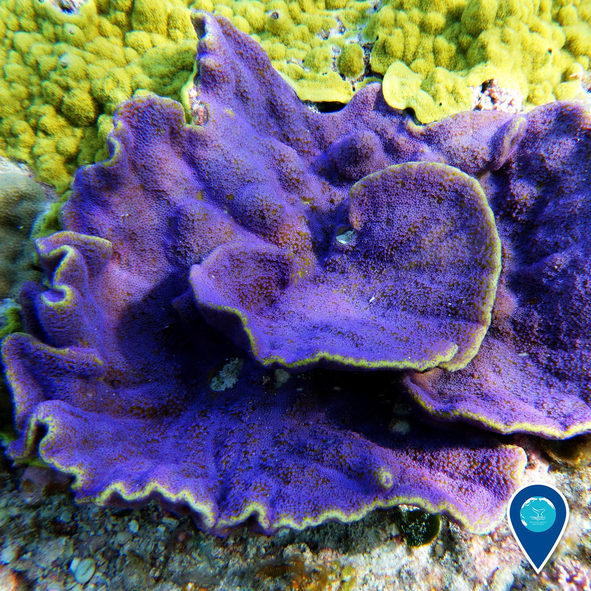 photo of purple and green coral