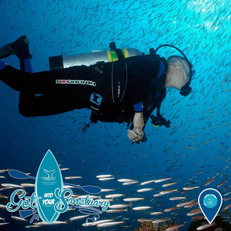 photo of a diver and a school of fish