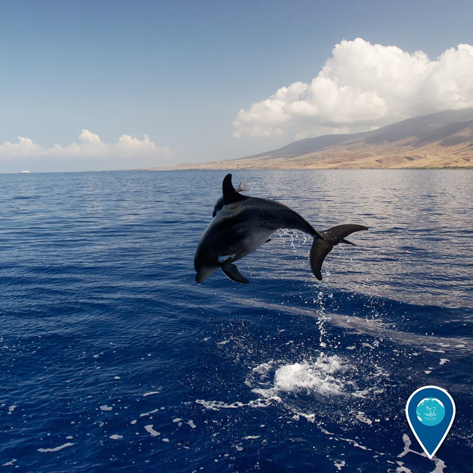 photo of a spinner dolphin