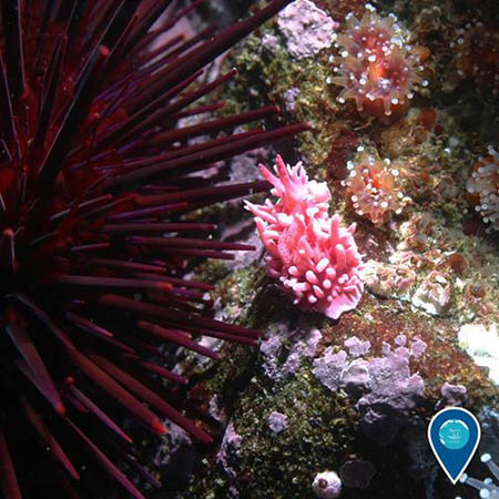 photo of a nudibranch and an urchin