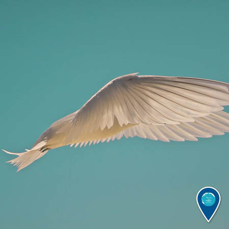 photo of a photo of white bird flying