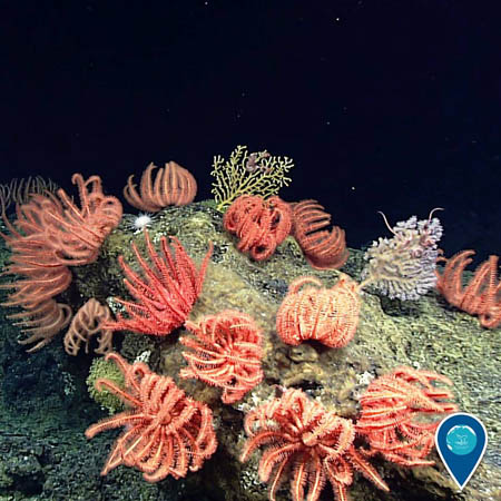 photo of bright corals