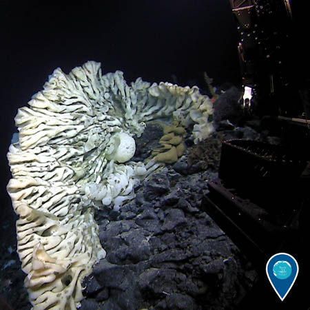 photo of a big white sponge