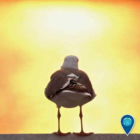 photo of the back of a seagull with a smokey sunset in the background