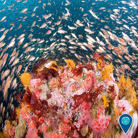 school of fish swimming around a coral reef