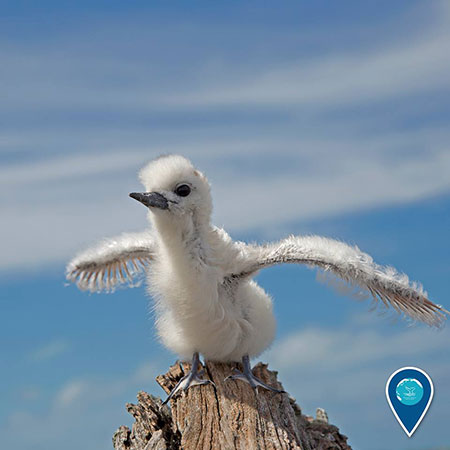 photo of a fluffy white chick stretching its wings